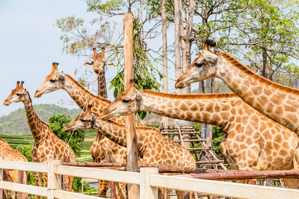 律實動物園  Dusit Zoo   -3