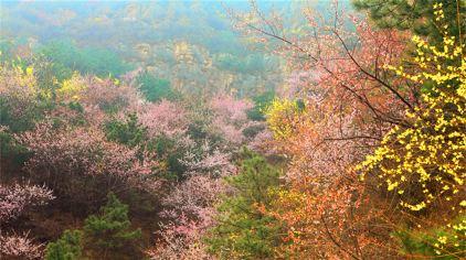 香木河自然保护区  (2)