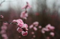 红泉桃花谷-德阳-xxxixxn