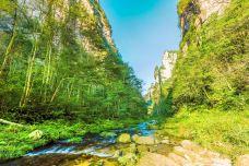 金鞭溪大峡谷-武陵源区-doris圈圈