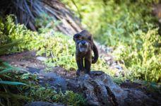柳岸野生动物保护区-基督城-doris圈圈