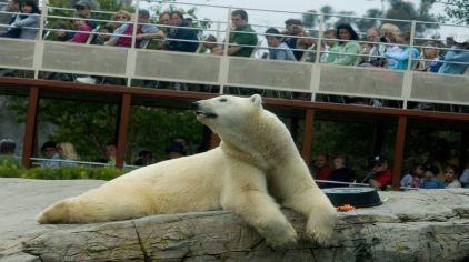 圣地亚哥动物园-3