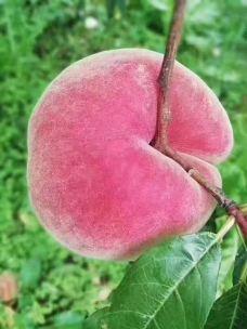 品品水果-石狮-滇国剑客