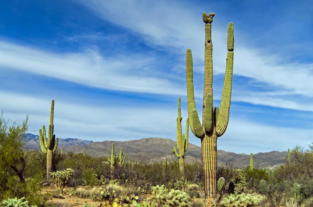 美國亞利桑那州圖姆斯頓+圖森+巨人柱國家公園一日遊(往返接送)