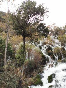 树正瀑布-九寨沟-172846899