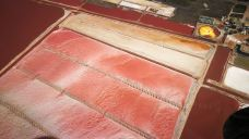 粉红湖-里约拉加尔多-翼儿爱自由