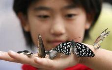世界百万蝴蝶展冰淇淋嘉年华-呼和浩特-AIian