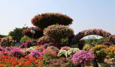 中国杜鹃花博览园-日照-AIian