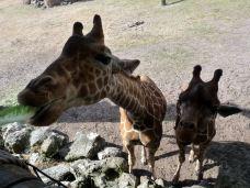 Jacksonville Zoo  Gardens-杰克逊维尔