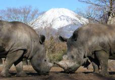 富士野生动物园-裾野市-一微淼