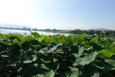 滨湖公园-徐州-无为-有为