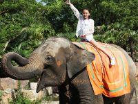 紧邻野生动物园!上海浦东机场莎海国际酒店+上海野生动物园门票【与动物近距离互动】