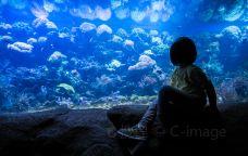青岛海底世界-青岛-doris圈圈