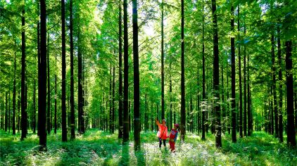 黄海森林公园 儿童