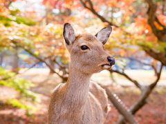 4日京都+大阪·岚山竹林火车+有马温泉+奈良鹿趣