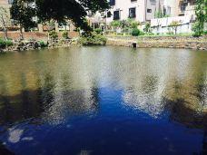 菰池公園-三岛市