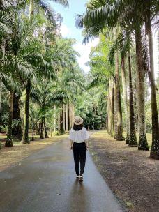 庞普勒斯植物园-毛里求斯-juki235