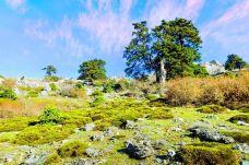 拉斯尼弗斯山脉自然公园-龙达-尊敬的会员