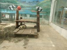 太原动物园-太原-M49****197