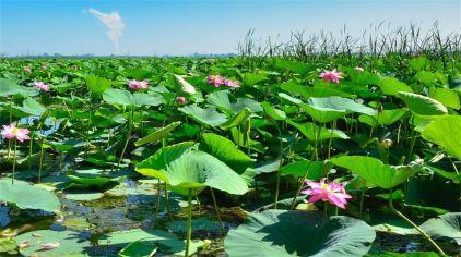 铁岭莲花湖湿地03