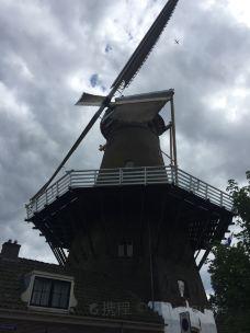 Korenmolen De Hoop-弗利兰