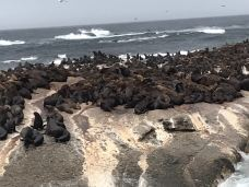 海豹岛-开普敦-xia****125