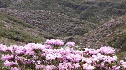 大海草山 (3)