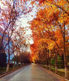 塔里木大学-阿拉尔-_CFT0****2530