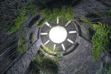 高知县立牧野植物园-高知市-C-IMAGE