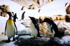 蒙特利尔自然生态博物馆-蒙特利尔-尊敬的会员