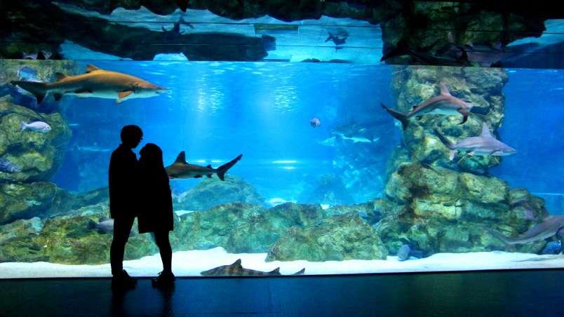 COEX Aquarium in Seoul Admission Ticket