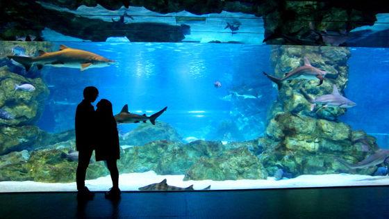 首爾 COEX 水族館門票