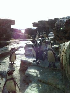 Zoo am Meer-不来梅哈芬