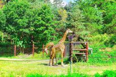 富兰克林动物园-波士顿-纽约漫时光