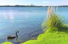 普普基湖-奥克兰-尊敬的会员