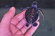 海龟孵化场-加勒-doris圈圈