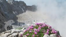 北极高山植物园