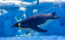 南极企鹅岛-天津