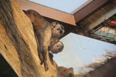 黑帽悬猴展区-南通-AIian