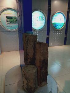 临朐县山旺化石博物馆-临朐
