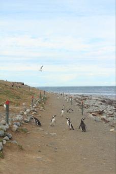 企鹅岛-蓬塔阿雷拉斯-wendysum