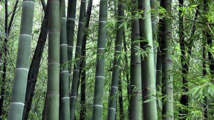 竹洞天风景区6