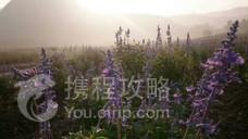 连州薰衣草世界