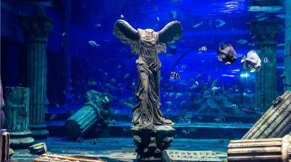 美人鱼表演区