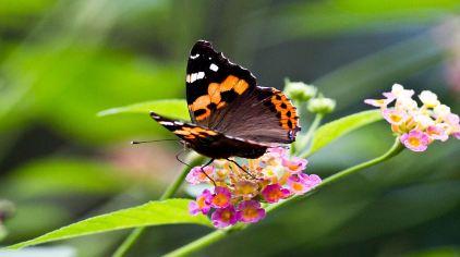 世界蝴蝶生态园 (5)