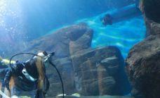 淡水生物馆-青岛
