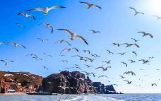 海驴岛-荣成