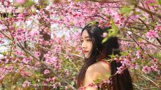 鄢陵花溪温泉-许昌