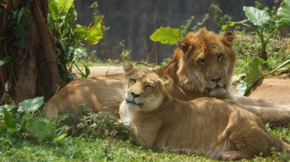 世界珍宝狮虎兽dsc00268