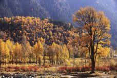 仙米国家森林公园-门源-尊敬的会员